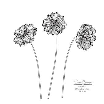 Desenhos de flor e folha de sol