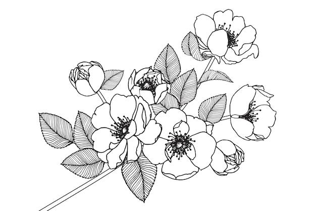 Desenhos de flor rosa de cão