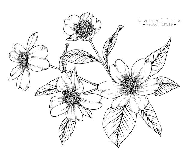 Desenhos de flores de camélia