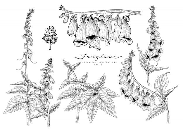 Desenhos de flores de dedaleira