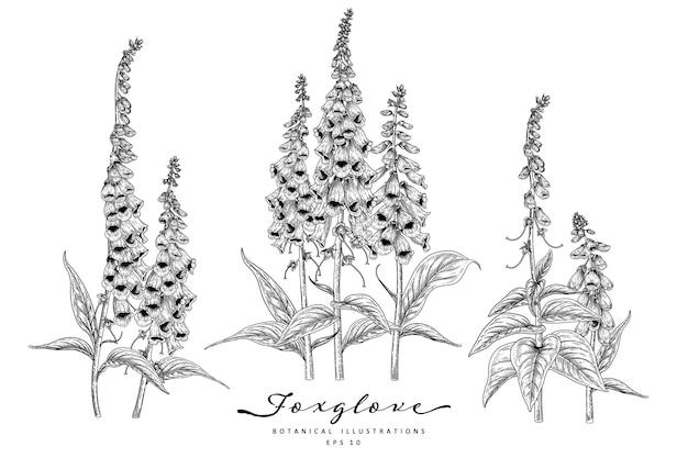 Desenhos de flores de dedaleira.