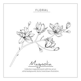 Desenhos de flores de magnólia. vintage mão ilustrações botânicas desenhadas.