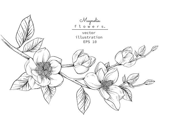 Desenhos de flores de magnólia.