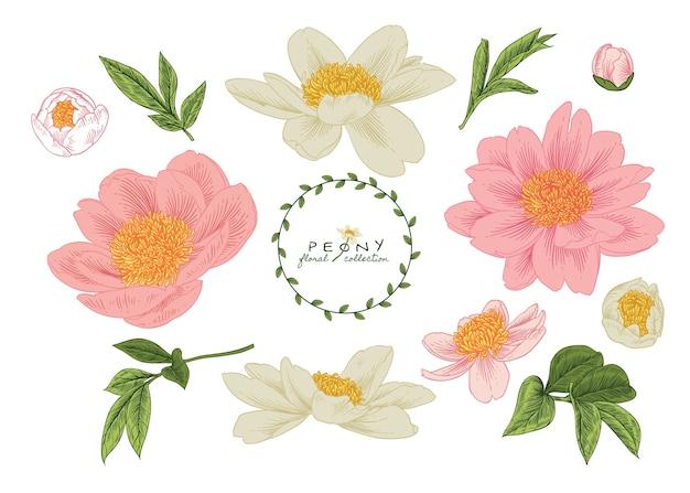 Desenhos de flores de peônia.