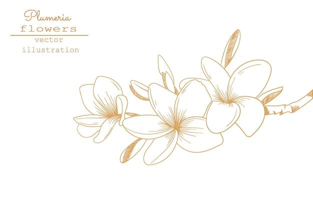 Desenhos de flores de plumeria. esboce a coleção de botânica floral. mão desenhando a ilustração botânica. flor tropical. vetor.