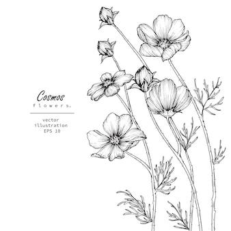 Desenhos de flores do cosmos