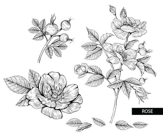 Desenhos de flores rosa.