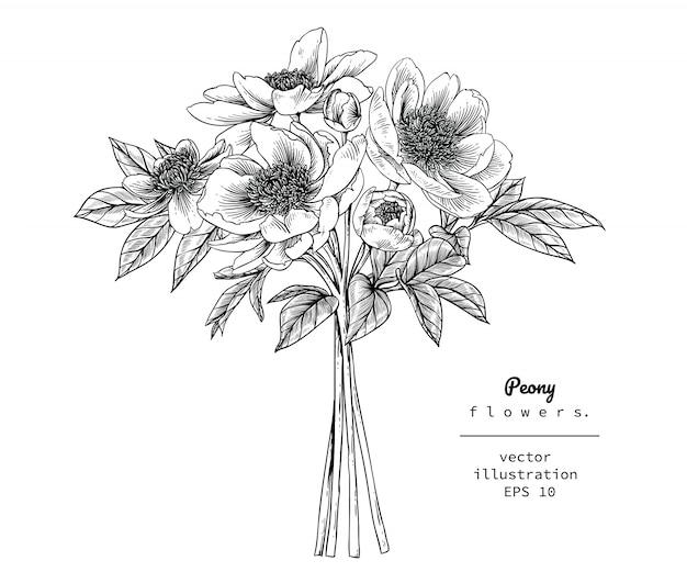 Desenhos de folha e flor de peônia