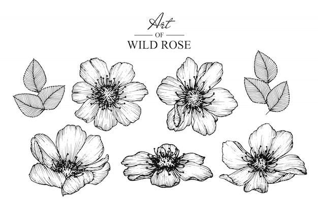 Desenhos de folha e flor rosa selvagem