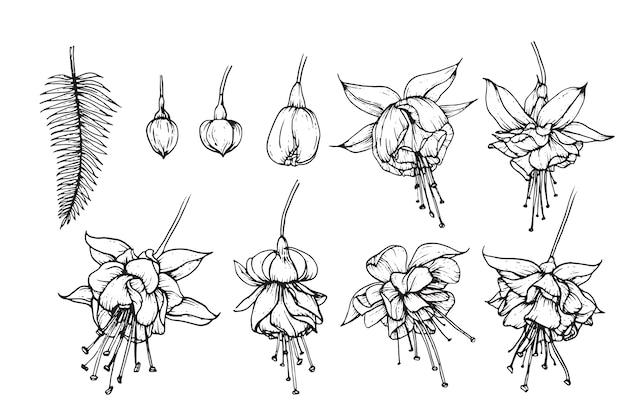 Desenhos de folhas e flores fúcsia