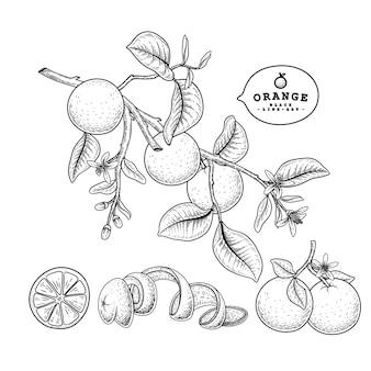 Desenhos de frutas laranja