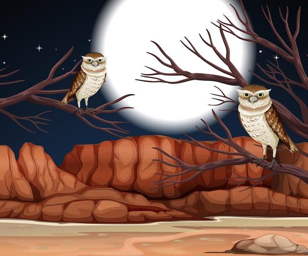 Deserto com montanhas rochosas e paisagem noturna de corujas