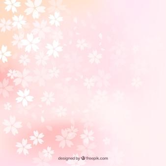 Desfocado flores de cerejeira fundo