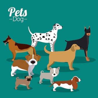 Design de animais de estimação