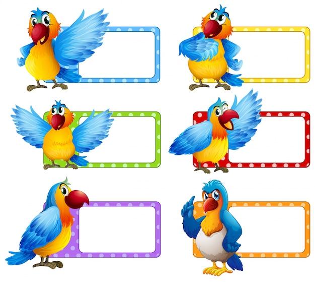 Design de etiqueta com ilustração colorida de macaw