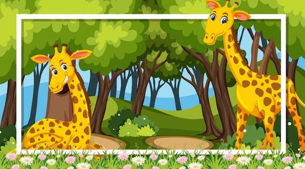 Design de moldura com girafas na floresta