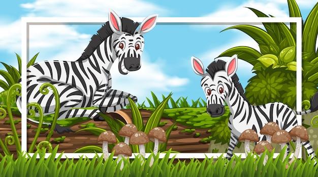 Design de moldura com zebras na floresta