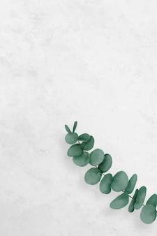 Design de moldura de eucalipto em branco