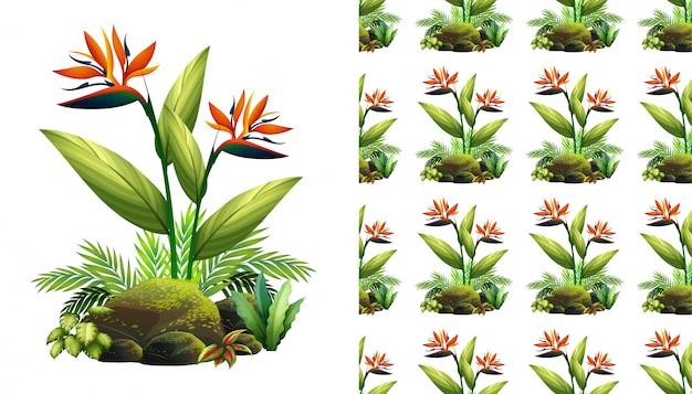 Design de plano de fundo sem emenda com flores ave do paraíso