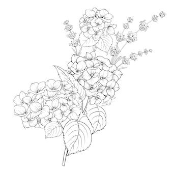 Design floral da alfazema e hortênsia isolado sobre fundo branco.