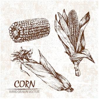 Design milho desenhada mão