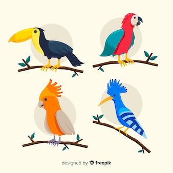 Design plano de coleção de aves exóticas