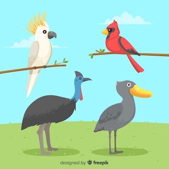 Design plano de coleção de pássaros exóticos coloridos