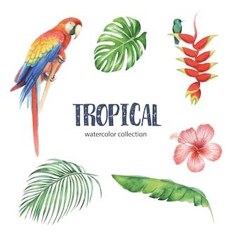 Design tropical com folhagem e flor. ilustração vetorial