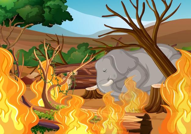 Desmatamento com elefantes e incêndios