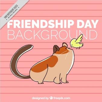 Dia da amizade, gato e pássaro