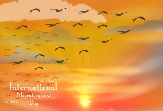 Dia internacional de aves migratórias no pôr do sol