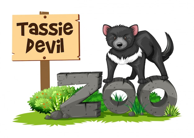Diabo da tasmânia no zoológico