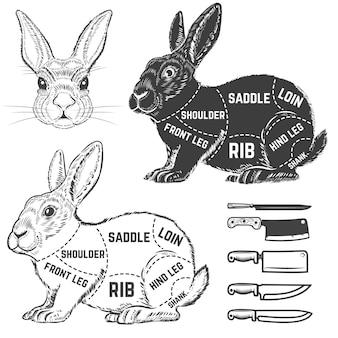 Diagrama de açougueiro de coelho. elemento para cartaz, menu. ilustração