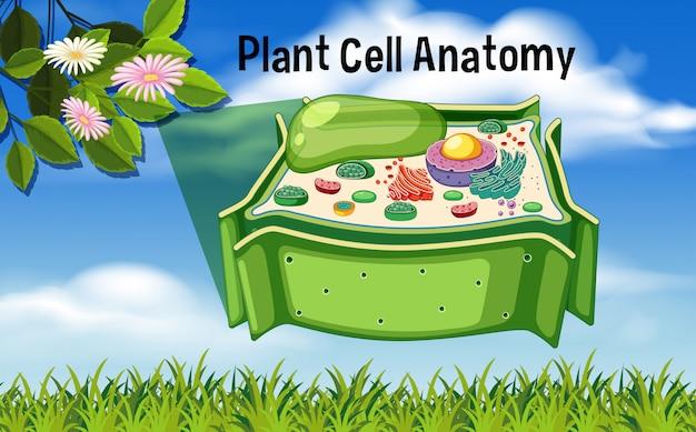 Diagrama de anatomia de células vegetais