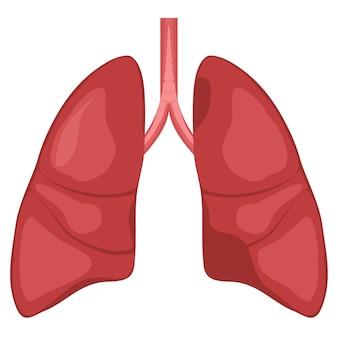 Diagrama de anatomia do pulmão humano. gráficos de câncer respiratório de doença.