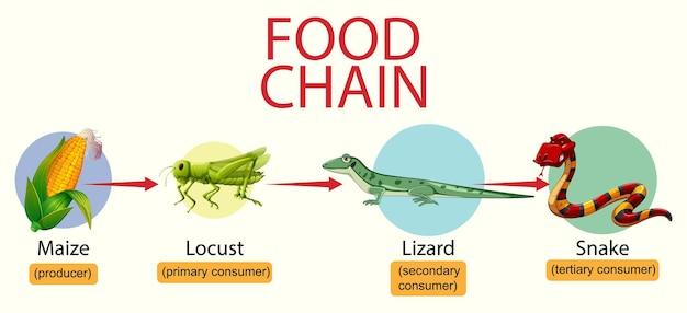 Diagrama de ciência da cadeia alimentar