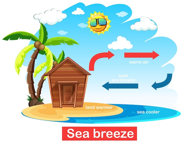 Diagrama mostrando a circulação da brisa do mar