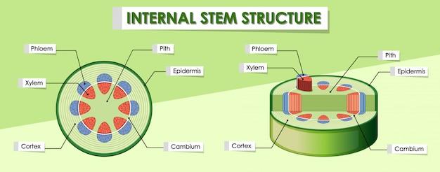 Diagrama mostrando a estrutura interna da haste