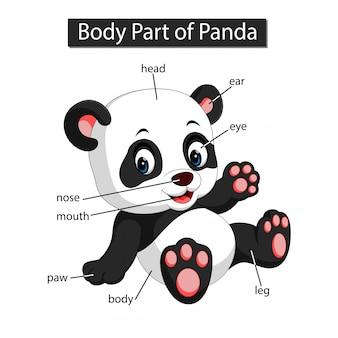 Diagrama mostrando a parte do corpo do panda
