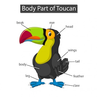 Diagrama mostrando a parte do corpo do tucano