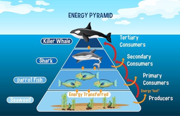 Diagrama mostrando a pirâmide energética do ártico para a educação