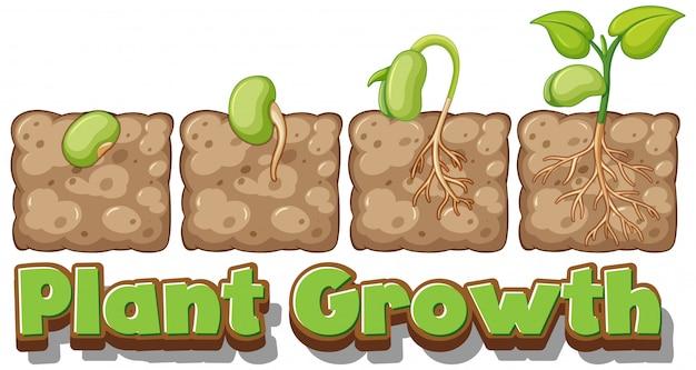 Diagrama mostrando como as plantas crescem a partir de sementes