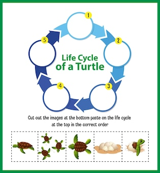 Diagrama mostrando o ciclo de vida da tartaruga