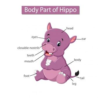 Diagrama mostrando parte do corpo do hipopótamo