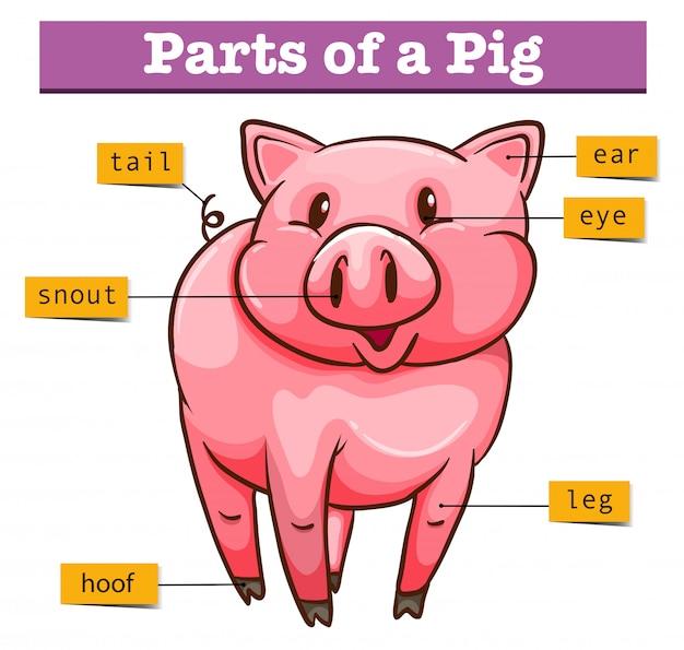 Diagrama mostrando partes de porco
