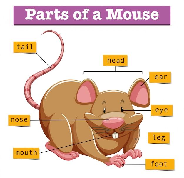 Diagrama mostrando partes do mouse