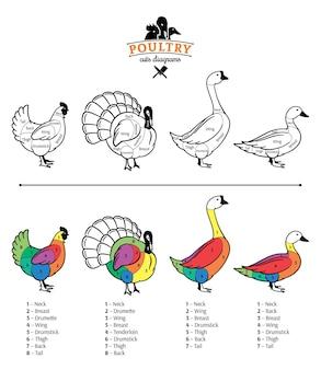 Diagramas de cortes vetoriais de frango, peru, pato e ganso