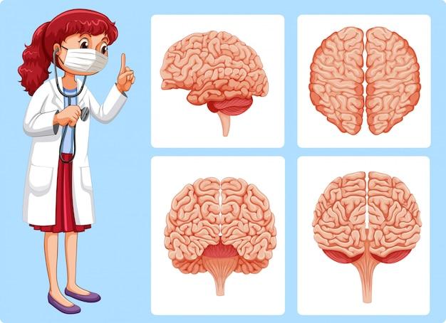 Diagramas de médico e cérebro