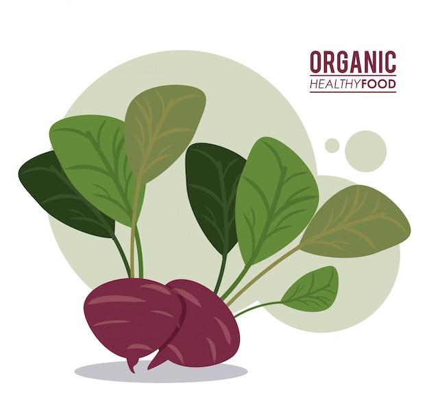 Dieta orgânica de beterraba alimentar saudável