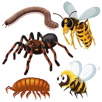 Diferente tipo de ilustração de insetos perigosos
